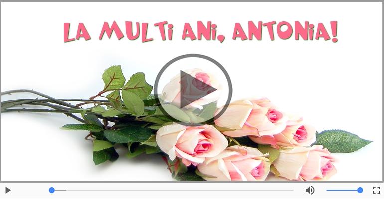 Felicitari muzicale de la multi ani - Antonia, La Multi Ani!